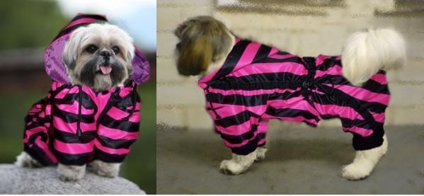 pink zebra-horz