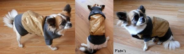puppy star 2-horz